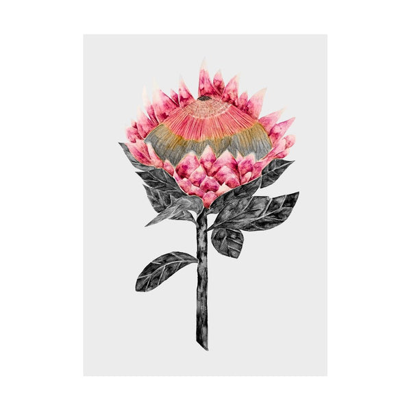 Blooming Protea with Grey Background