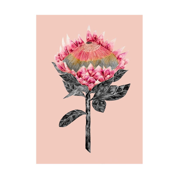 Blooming Protea with Blush Background
