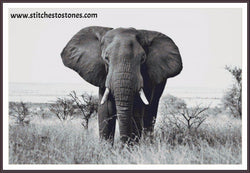 African Elephant Diamond Painting