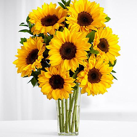 SAME DAY DELIVERY: SUNFLOWER SWEETNESS!