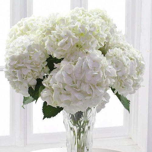 SAME DAY DELIVERY: WHITE OUT WITH FREE VASE!