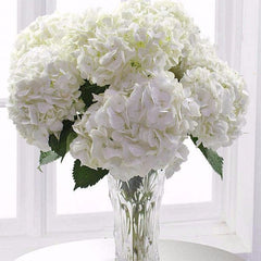 TODAY'S SPECIAL: WHITE OUT, WITH FREE VASE