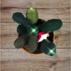 Photograph of sample project consisting of plant made from felt with LED lights