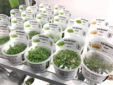 Tissue culture plants rock!