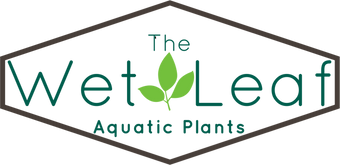 The Wet Leaf Aquarium Plants