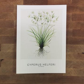 Art Card Set #1 - C. helferi