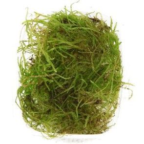 Java Moss Tropica - Aquascaping, [Product_type] - Aquarium plants Canada, [Product_vendor] - Aquarium stone, Driftwood, [shop name] The Wet Leaf
