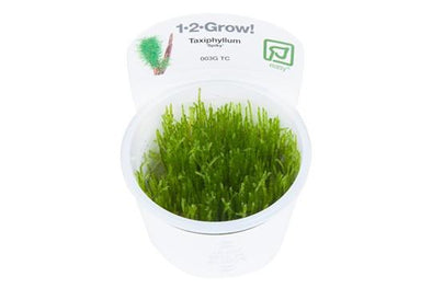 Spiky moss 1-2 Grow - Aquascaping, [Product_type] - Aquarium plants Canada, [Product_vendor] - Aquarium stone, Driftwood, [shop name] The Wet Leaf