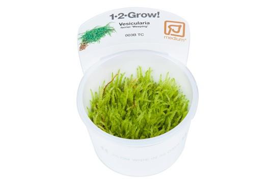 Weeping moss 1-2 Grow - Aquascaping, [Product_type] - Aquarium plants Canada, [Product_vendor] - Aquarium stone, Driftwood, [shop name] The Wet Leaf