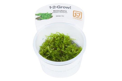 Christmas moss 1-2 Grow - Aquascaping, [Product_type] - Aquarium plants Canada, [Product_vendor] - Aquarium stone, Driftwood, [shop name] The Wet Leaf