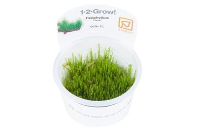Flame moss 1-2 Grow - Aquascaping, [Product_type] - Aquarium plants Canada, [Product_vendor] - Aquarium stone, Driftwood, [shop name] The Wet Leaf