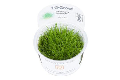 Eleocharis acicularis 'mini'  1-2 Grow - Aquascaping, [Product_type] - Aquarium plants Canada, [Product_vendor] - Aquarium stone, Driftwood, [shop name] The Wet Leaf