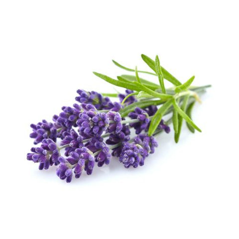 Organic Lavender 100% Pure Therapeutic Essential Oil 10ml