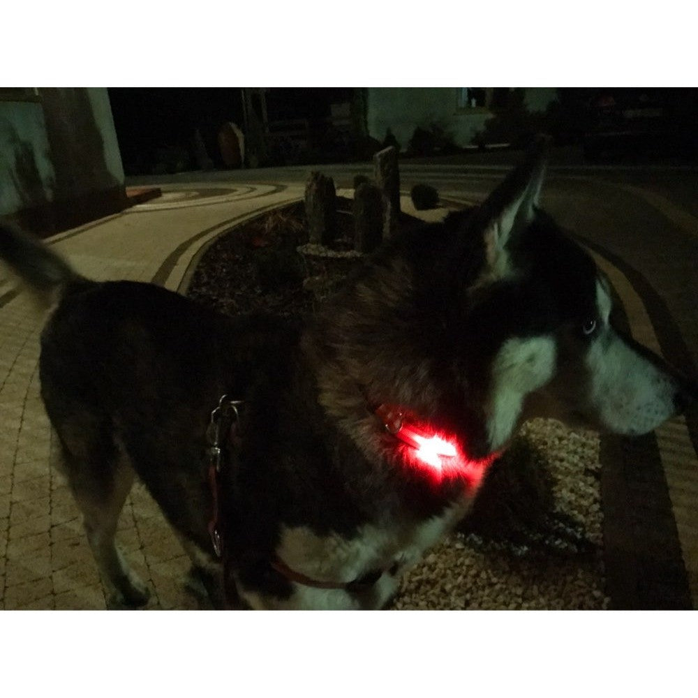 product glowtopia collar led dog img black glowing bg green square up off light