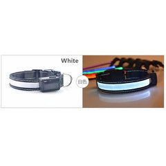 Luminous Dog Collar | High Quality Chargeable Collar