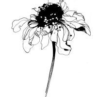 Flower Poster - Black Flowers2 21 X 30cm