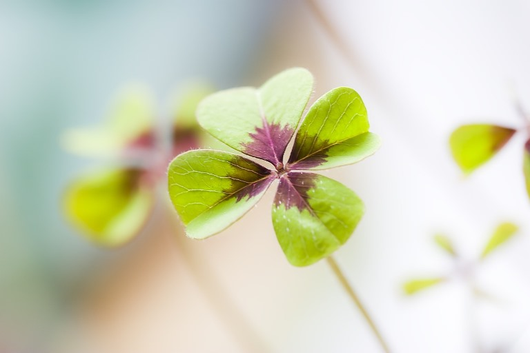 5 Things to Reflect on During St. Patrick's Day