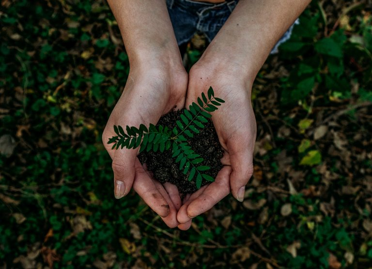 7 Practical Ways to Care for the Environment as a Christian