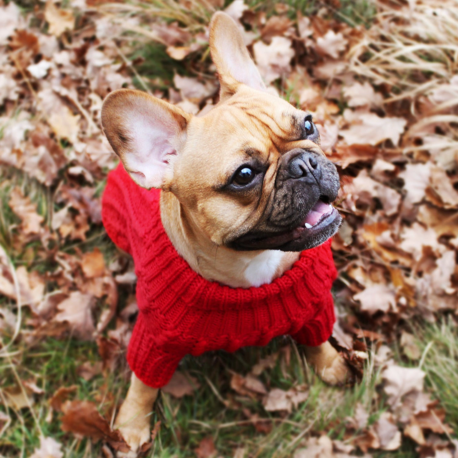 Red knitted jumper for dogs