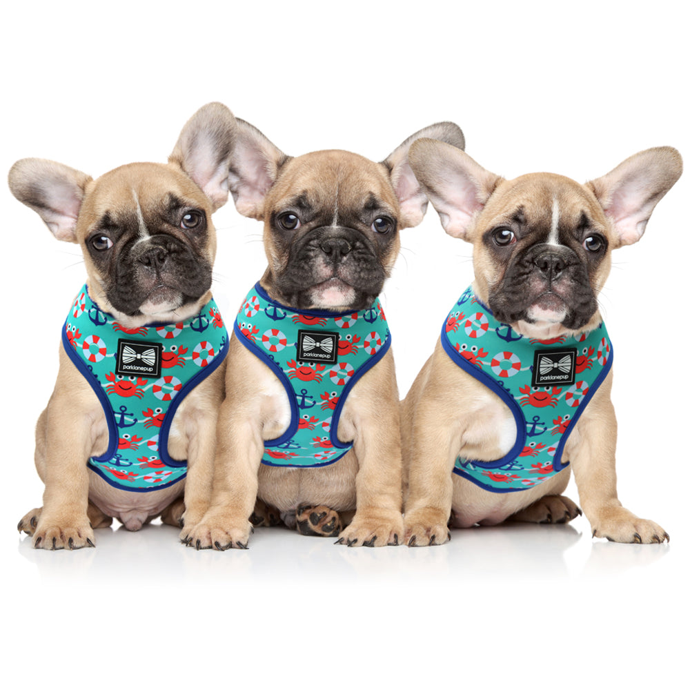 Queen's Guard reversible dog harness