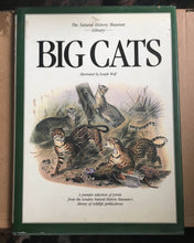 Book : Big Cats - A selection of Magnificent illustrations by Joseph Wolf