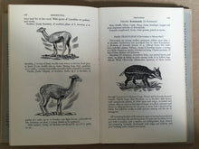 Book : Systematic Dictionary of Mammals of the World  Maurice Burton