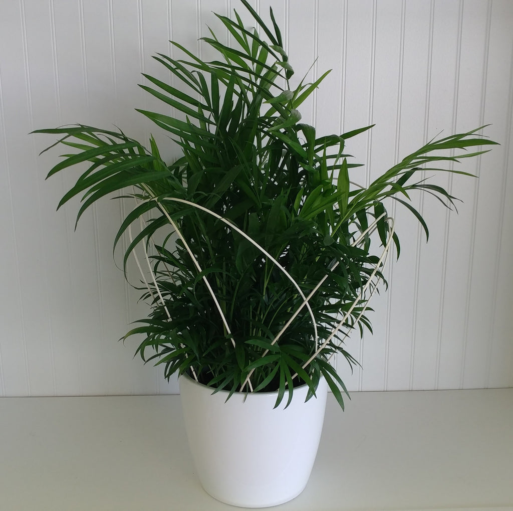 Decorated Green Plant