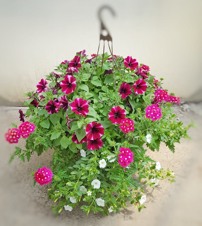 Outdoor Annual Hanging Basket