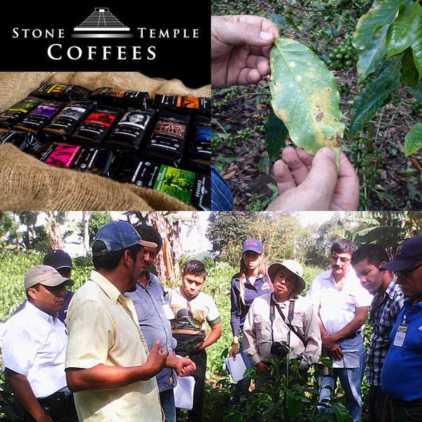 Stone Temple Coffee Company's Coffee Leaf Rust Mission
