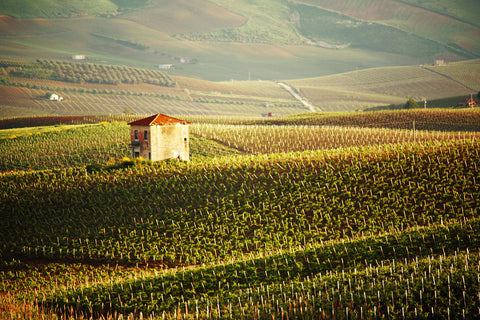 Squadra - Vineyards of Alcamo, Sicily