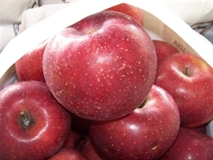 Red Rome (standard) Apple