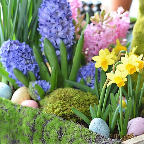 Small spring bulb garden branch bloom small spring bulb garden small spring bulb garden mightylinksfo