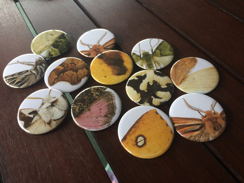 NZ Native Moth Series -Arty - Dozen standard badges