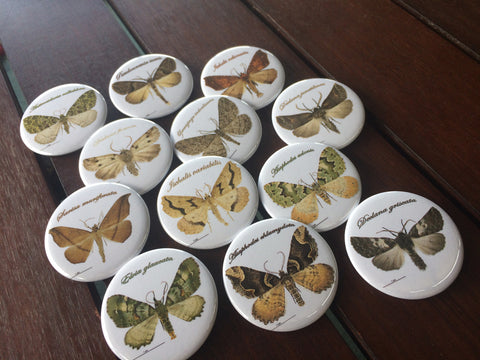 NZ Native Moth Series - Science Dozen Standard badges