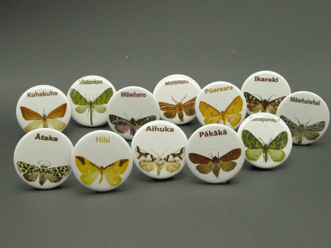 NZ Native Moth Series - Dozen standard badges with Te Reo Māori kupu
