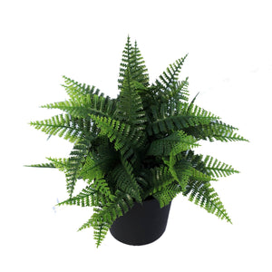 Small Potted Fern Plant UV Resistant 20cm