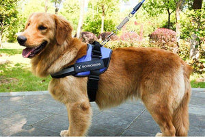Dog Harness Vest Chest Walk Out M BLUE