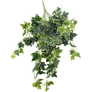 Mixed Green and White Tipped Ivy Bush 100cm