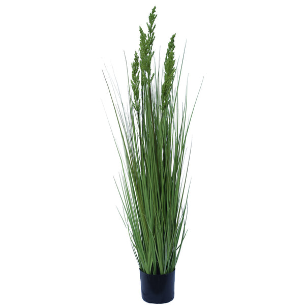 Flowering Native Grass 120 cm