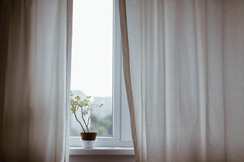 Plant on a window sill with blinds partially closed.