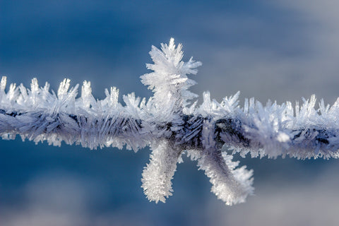 Close-up of ice crystals on a tree branch.