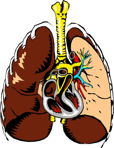 Heart and lung health are directly linked.