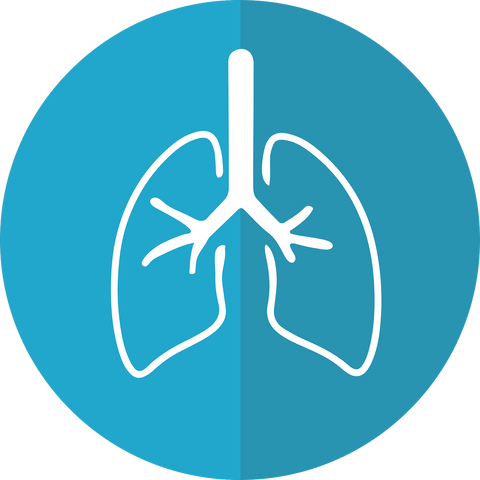 Blue and white illustration of human lungs.