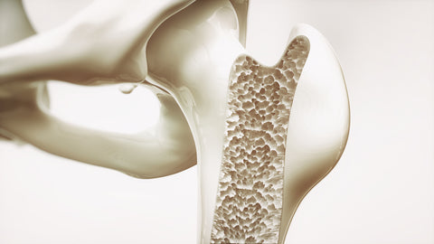 Close-up of plastic skeleton with osteoporosis.