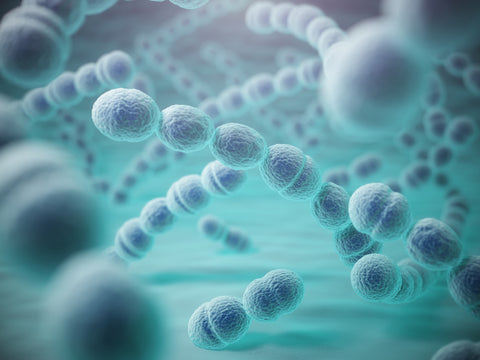 Computer-generated image of the bacteria that causes pneumonia.