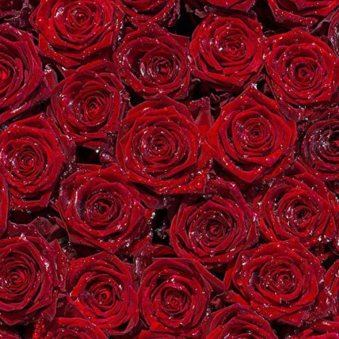Red Rose Flower Photography Studio Backdrop Background
