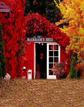 Red Yellow Leaf Tree Wood Cabin Autumn Fall Backdrop Photography Studio Background