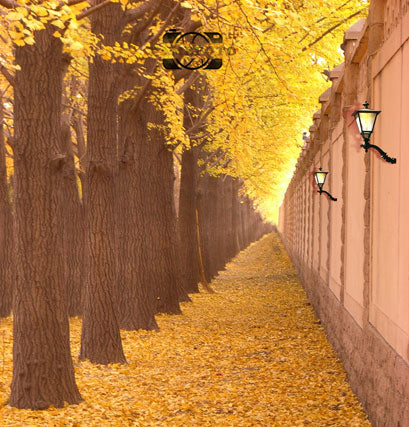 Yellow Leaves Trees Road Autumn Fall Scenic Backdrop Photography Studio Background