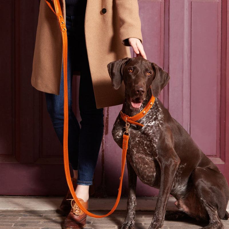Dog leash - Orange Tangerine-Petsochic