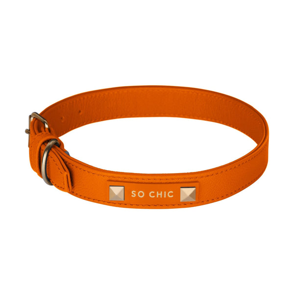 Dog collar - Orange Tangerine-Petsochic